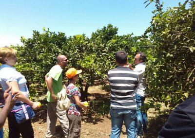 """Corso dal titolo """"La Cooperazione nella Filiera Agrumicola"""" a Siracusa (SR) e Catania (CT) previsto dal progetto Social Farming"""